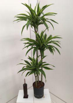 Planten Plants Pflanzen